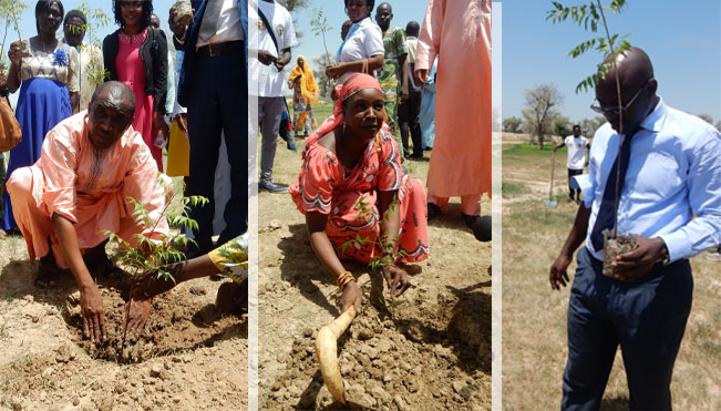 Arbustes plantés par les responsables